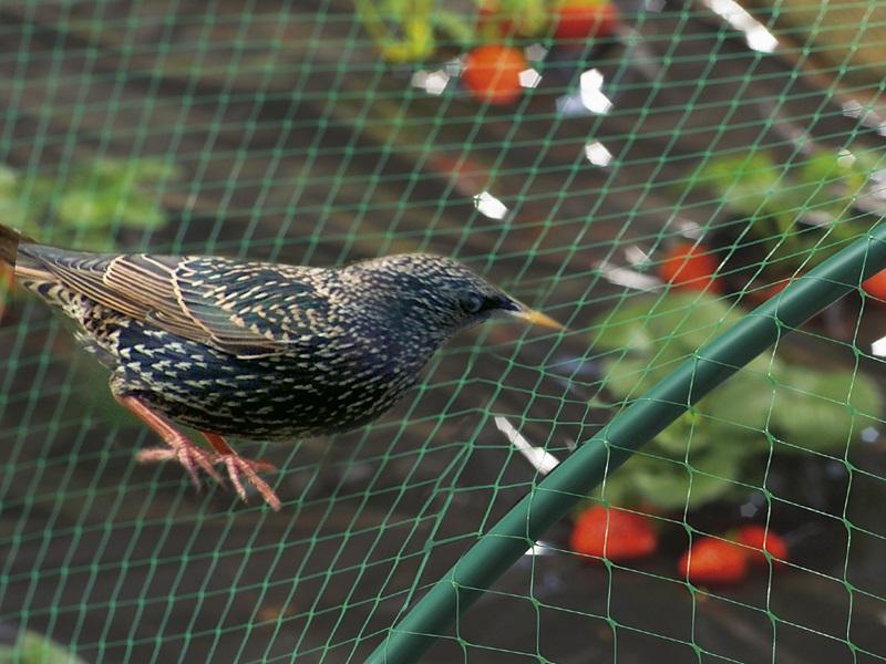 Екструдирана мрежа за защита от птици 2х10