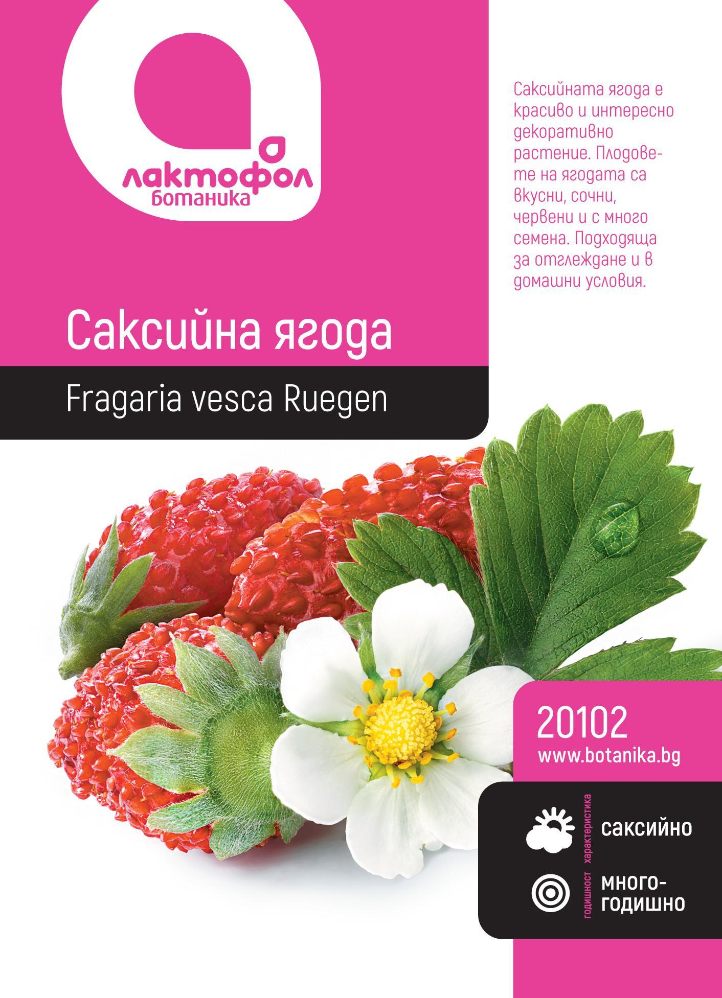 Саксийна ягода