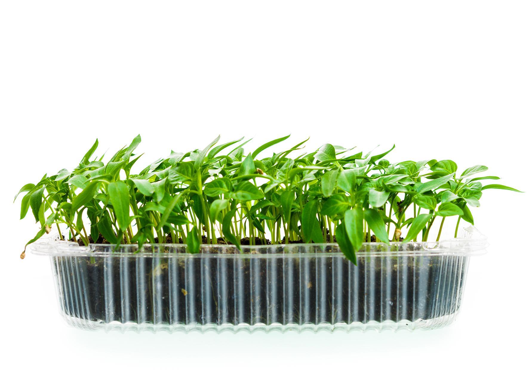 Тавичка за отглеждане на микро растения1691