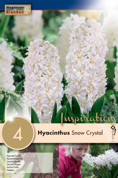 Зюмбюл double Snow crystal 16/17 4бр.