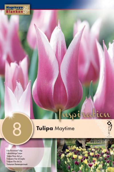 Лале LILY FLOWERED MAYTIME / Ballade 12/+ 8бр.