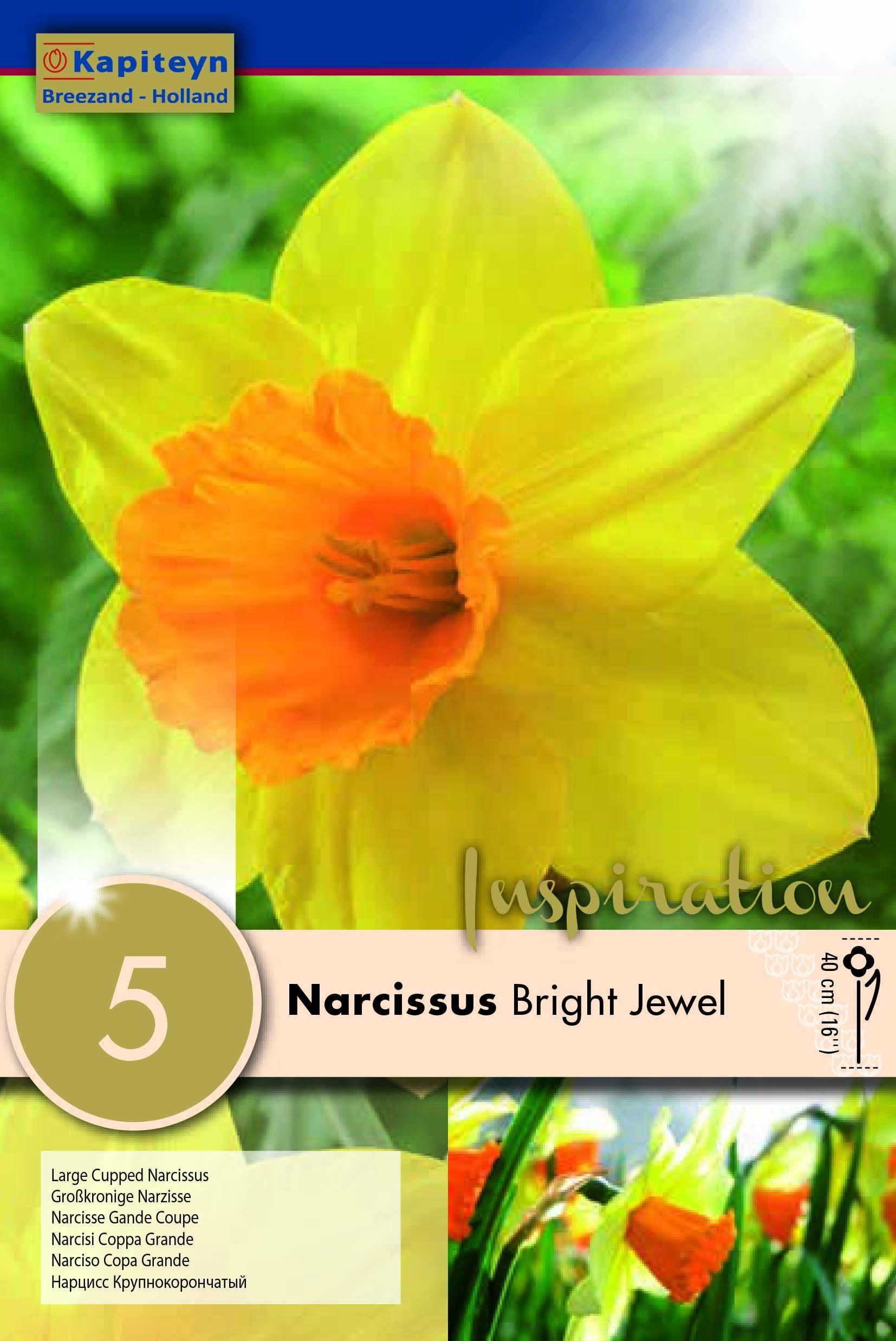 Нарцис LARGE CUPPED BRIGHT Jewel 14/16 5бр.