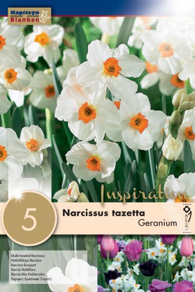 Нарцис BUNCH FLOWERING GERANIUM 14/16 5бр.