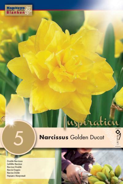 Нарцис DOUBLE GOLDEN DUCAT 14/16 5бр.