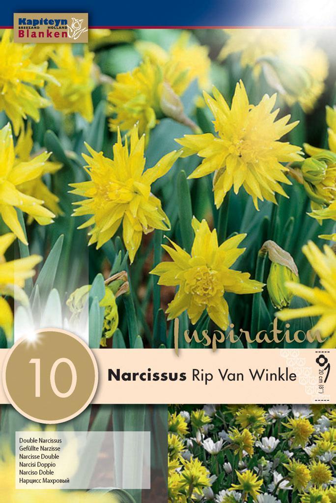 Нарцис BOTANICAL RIP VAN WINKLE