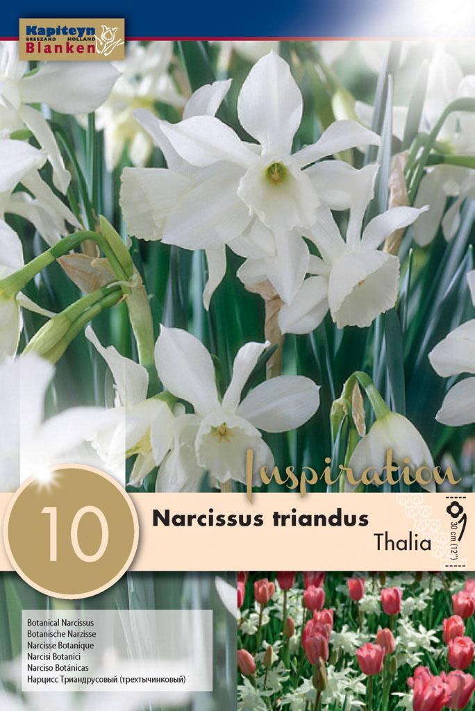 Нарцис BOTANICAL THALIA 10-12 10бр.