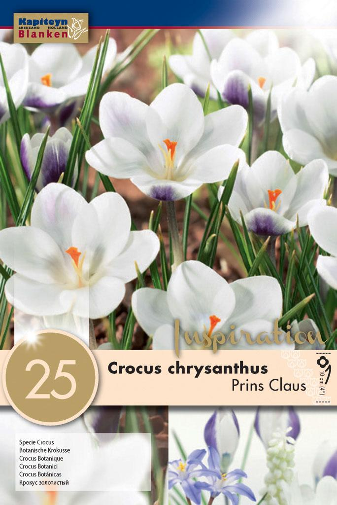 Минзухар PRINS CLAUS 5+ 25 бр.