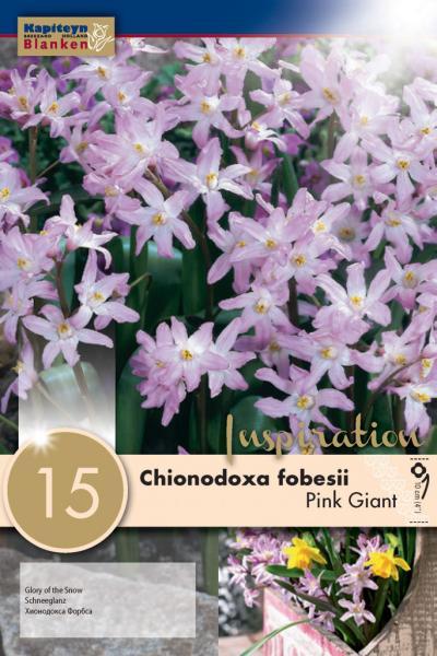 Хиондокса Pink Giant 15бр. 5/6