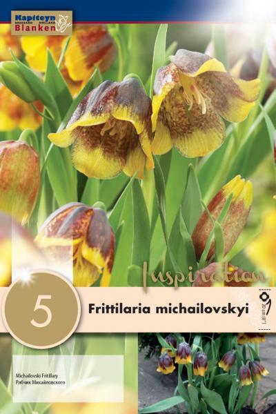 Фритилария MICHAILOVSKYI 5/+