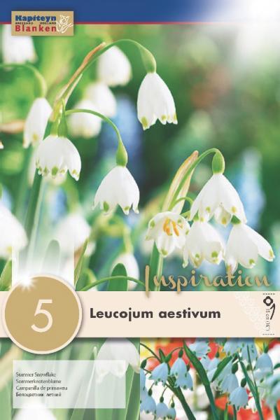 Блатно кокиче - Aestivum 10/12 5 бр.