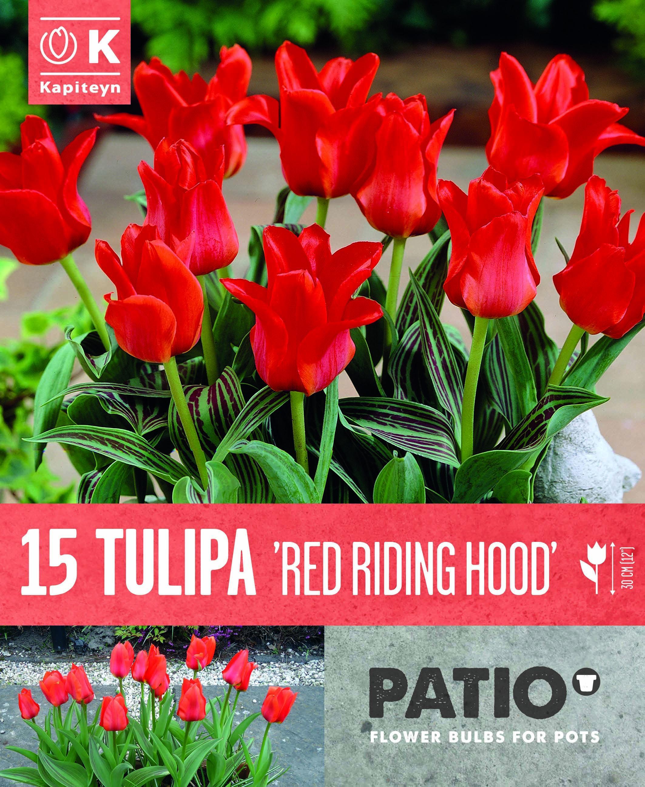 Балконски - Лале GREIGII RED RIDING HOOD 11-12 15 бр.