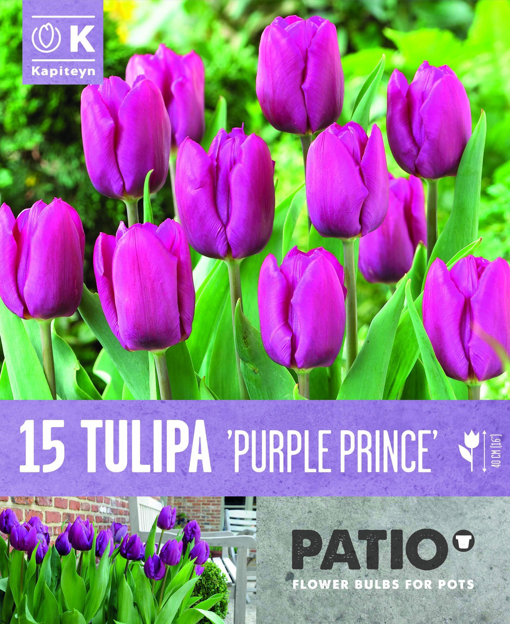 Балконски - Лале TRIUMPH PURPLE PRINCE 11-12 15 бр.
