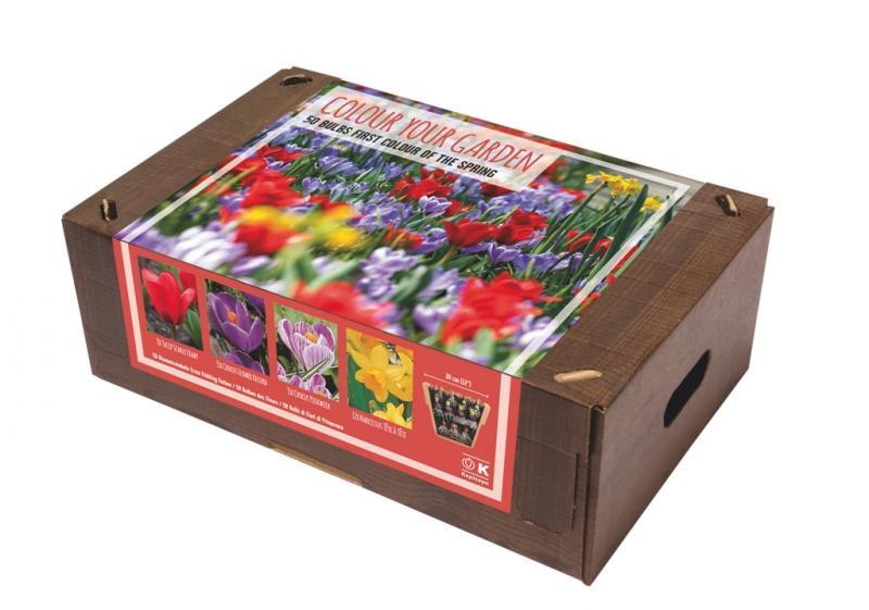 Цветна градина - Първият цвят на пролетта 50бр.