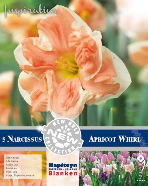 NEW BULB Нарцис APRICOT WHIRL 14/16