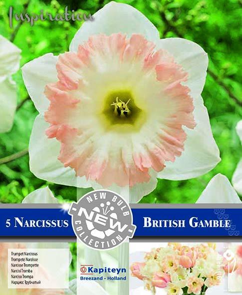 NEW BULB Нарцис BRITISH GAMBLE 14/16 5 бр.