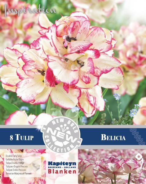 NEW BULB Лале DOUBLE BELICA 12/+ 8бр.