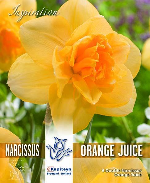 Нарцис ORANGE JUICE - Pure Orange 14-16/ 6бр.