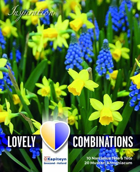 Комбинация жълт нарцис/синьо мускари 10-11/ 50бр.