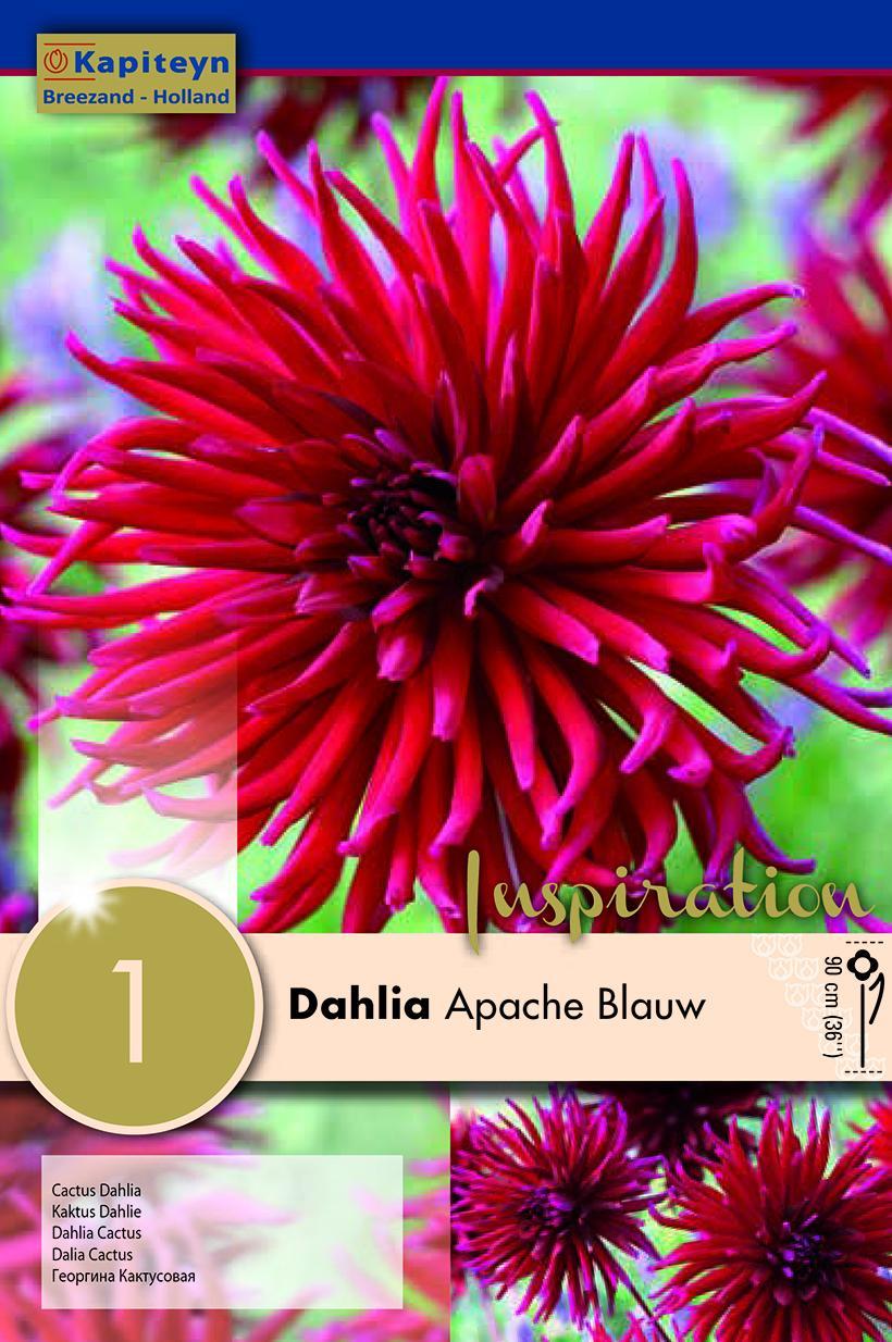 Далия - Apache Blauw 1 бр.