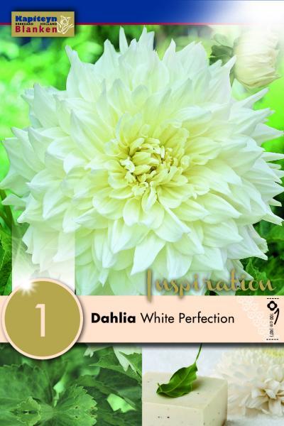 Далия декоративна White perfection 1 бр.