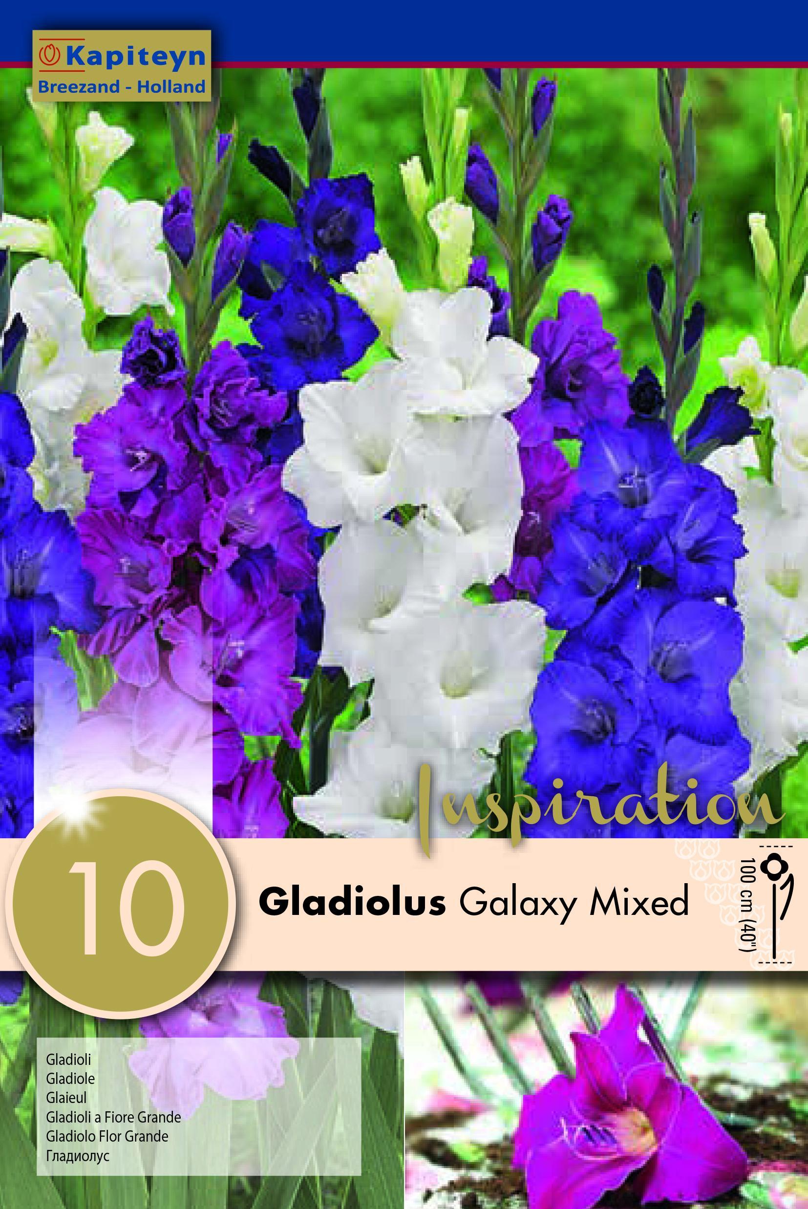 Гладиоли Galaxy Mixed 10бр.