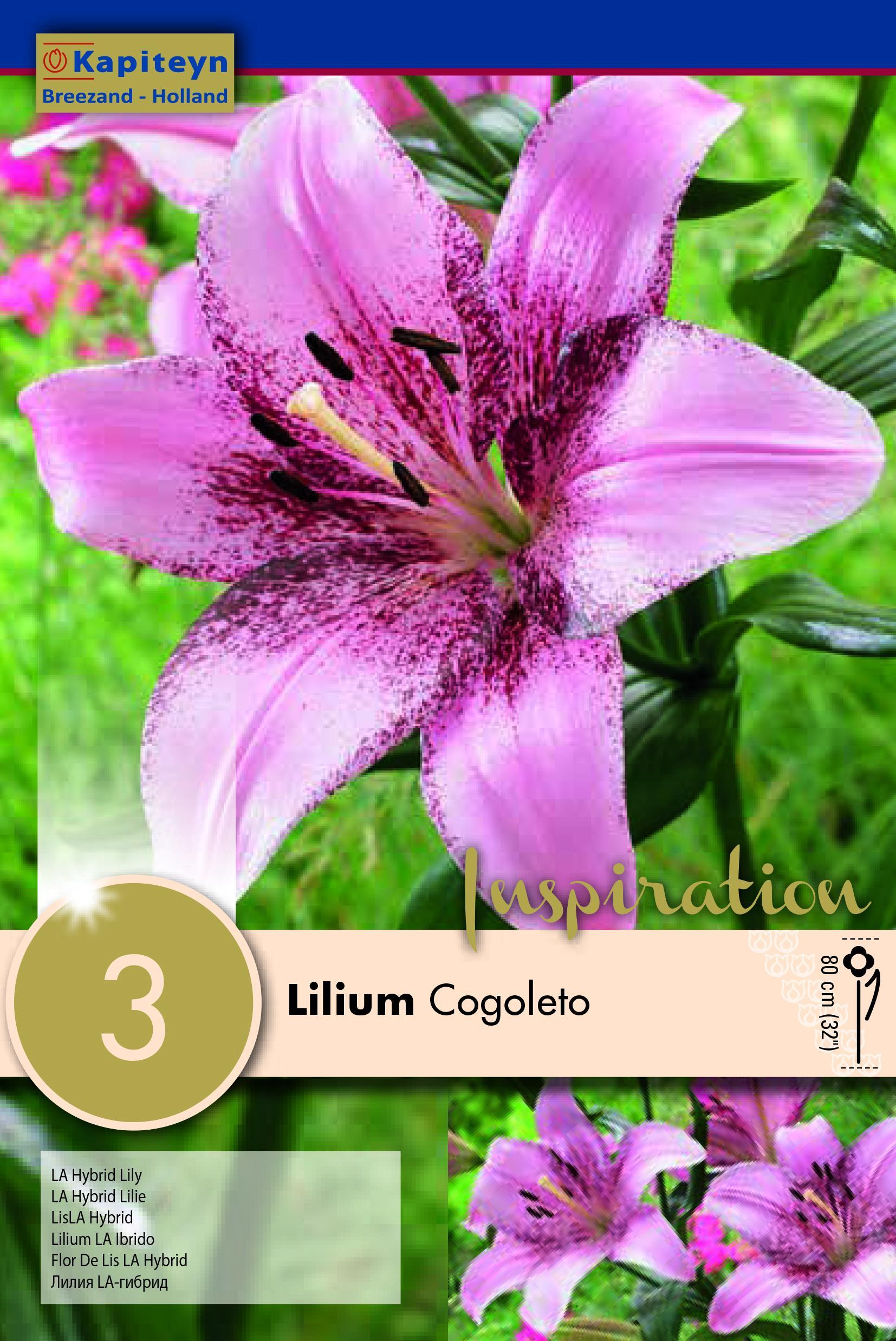Лилиум азиатик Cogoleto 3бр.