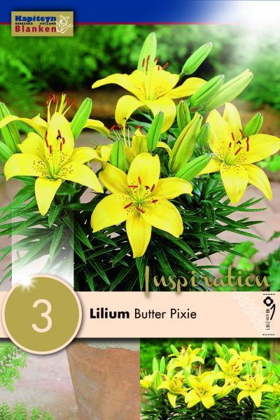 Лилиум за саксия Yellow Pixie 3бр.