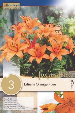 Лилиум за саксия Orange Pixie 3 бр.