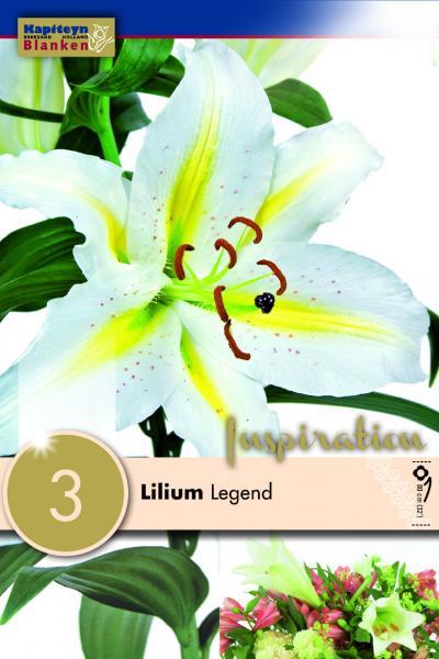 Лилиум ориенталски Baferrari 3 бр.