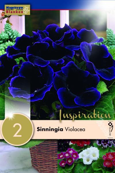 Глоксиния Violacea 2бр.