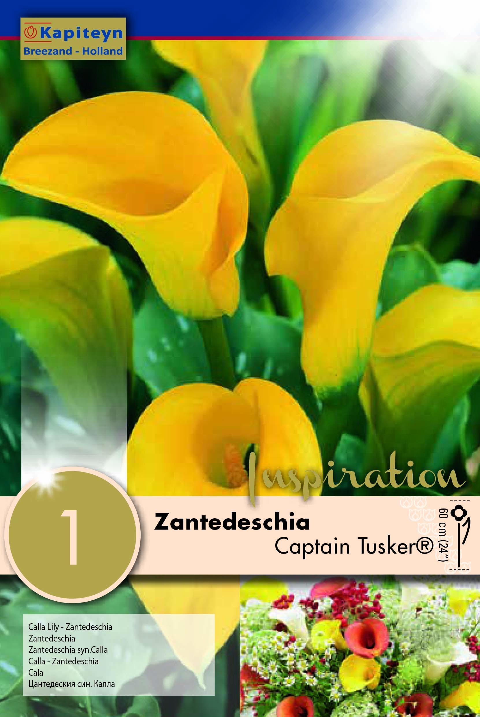 Кала Captain Tusker 1бр.