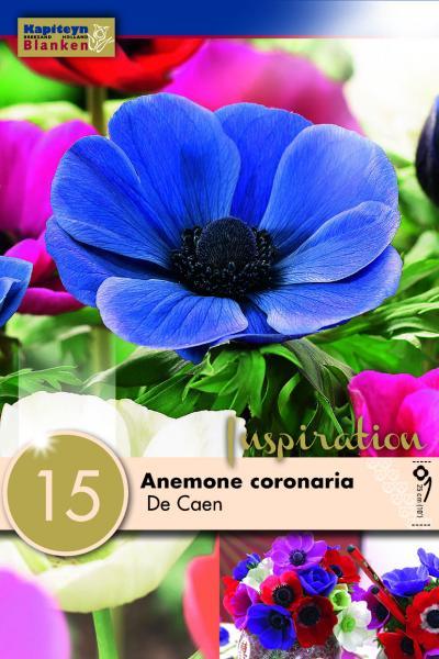 Анемoне Coronaria de Caen 15бр.