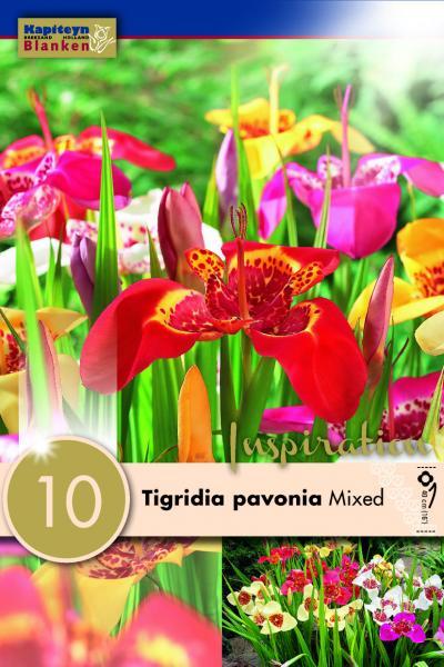 Тигридия павония микс 10бр.