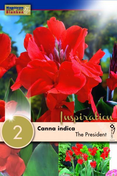 Канна Indica The President Green Leaf 2бр.