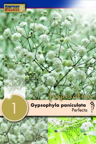 Гипсофила paniculata perfecta бяла 1бр.