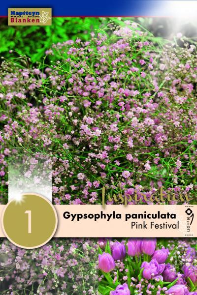 Гипсофила paniculata розова 1бр.