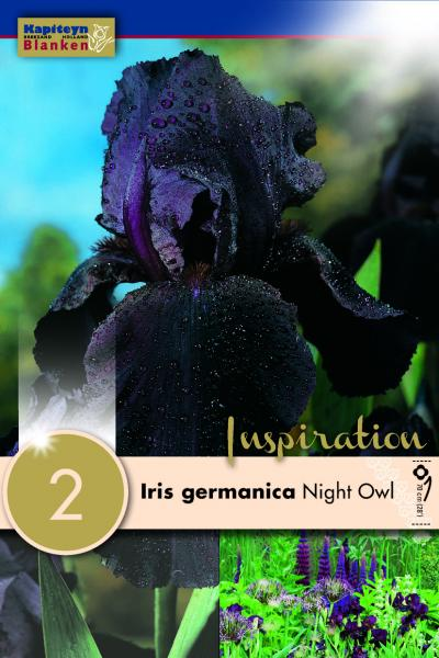 Ирис germanica Night Owl  2бр.