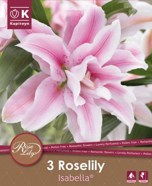 NEW bulbs roselily Лилиум Isabella 3бр. 16/18