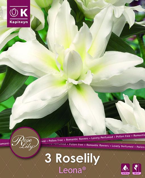 NEW bulbs Roselily Лилиум Leona 3бр. 16/18