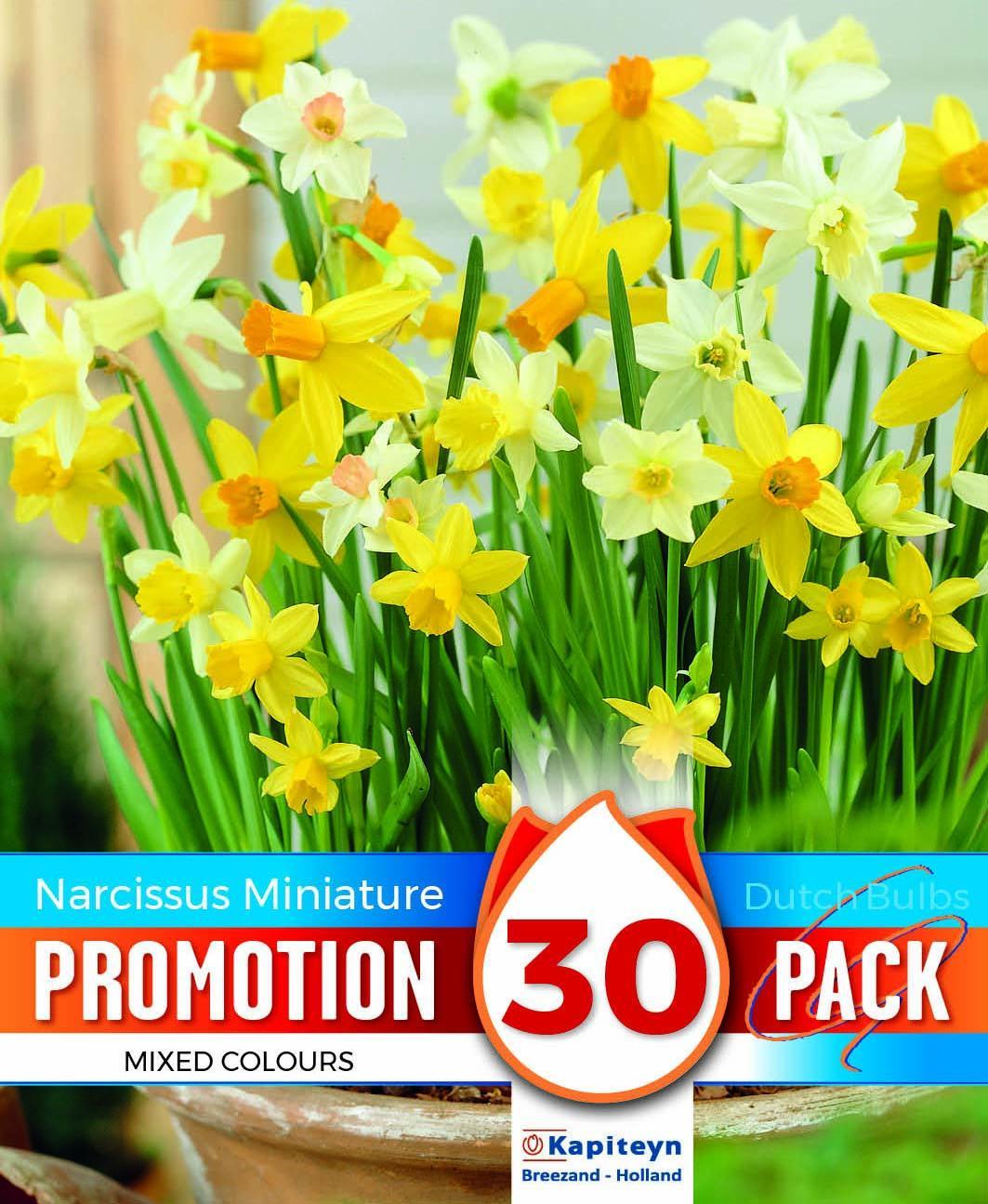 Промо пакет нарциси BOTANICAL MIXED COLOURS 30бр.