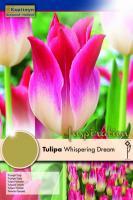 Лале TRIUMPH WHISPERING DREAM 11/12 10бр.