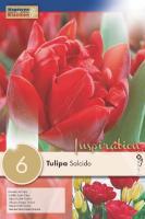 Лале DOUBLE SALCIDO 12/+ 6бр.4343