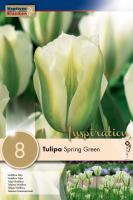 Лале VIRIDIFLORA SPRING GREEN 12/+ 8бр.