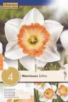 Нарцис LARGE CUPPED ZAFIRA 14/16 4бр.