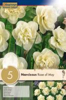 Нарцис DOUBLE FRAGRANT ROSE OF MAY  10/12 5бр.