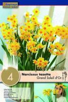 Нарцис INDOOR GRAND SOLEIL D'OR 15-16/ 4бр.