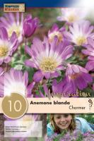 Анемоне Blanda CHARMER 7/8 10бр.