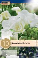 Фрезия DOUBLE WHITE 6/8 10бр.