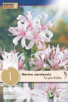 Нерине SARNIENSIS PURPLE ROBBS 12/+ 1 бр.