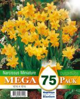Мега пакет Нарцис TETE A TETE 10/11 75бр.